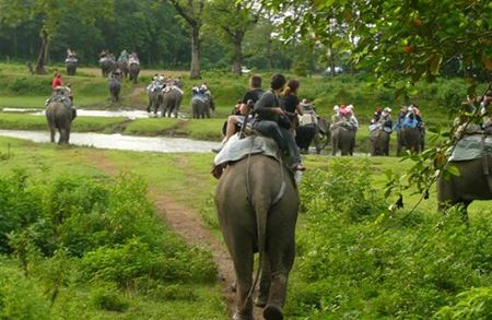 Picture for category Chitwan Tour Deals