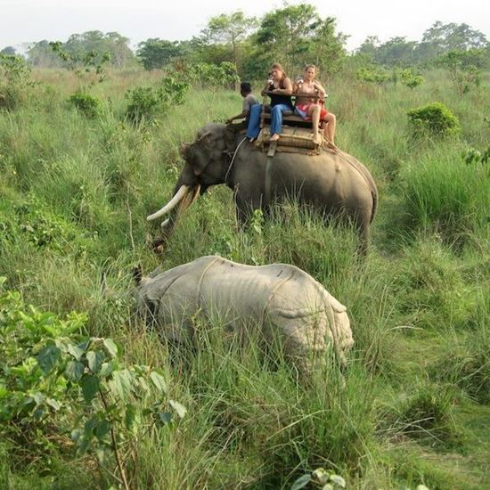 Elephant Ride and Safari